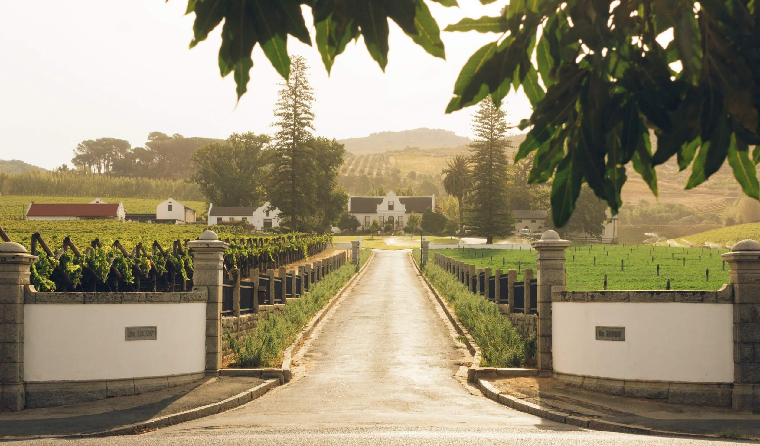 Winelands Tour Image