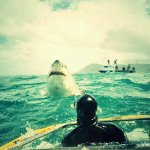 A Review On The White Shark Diving Company