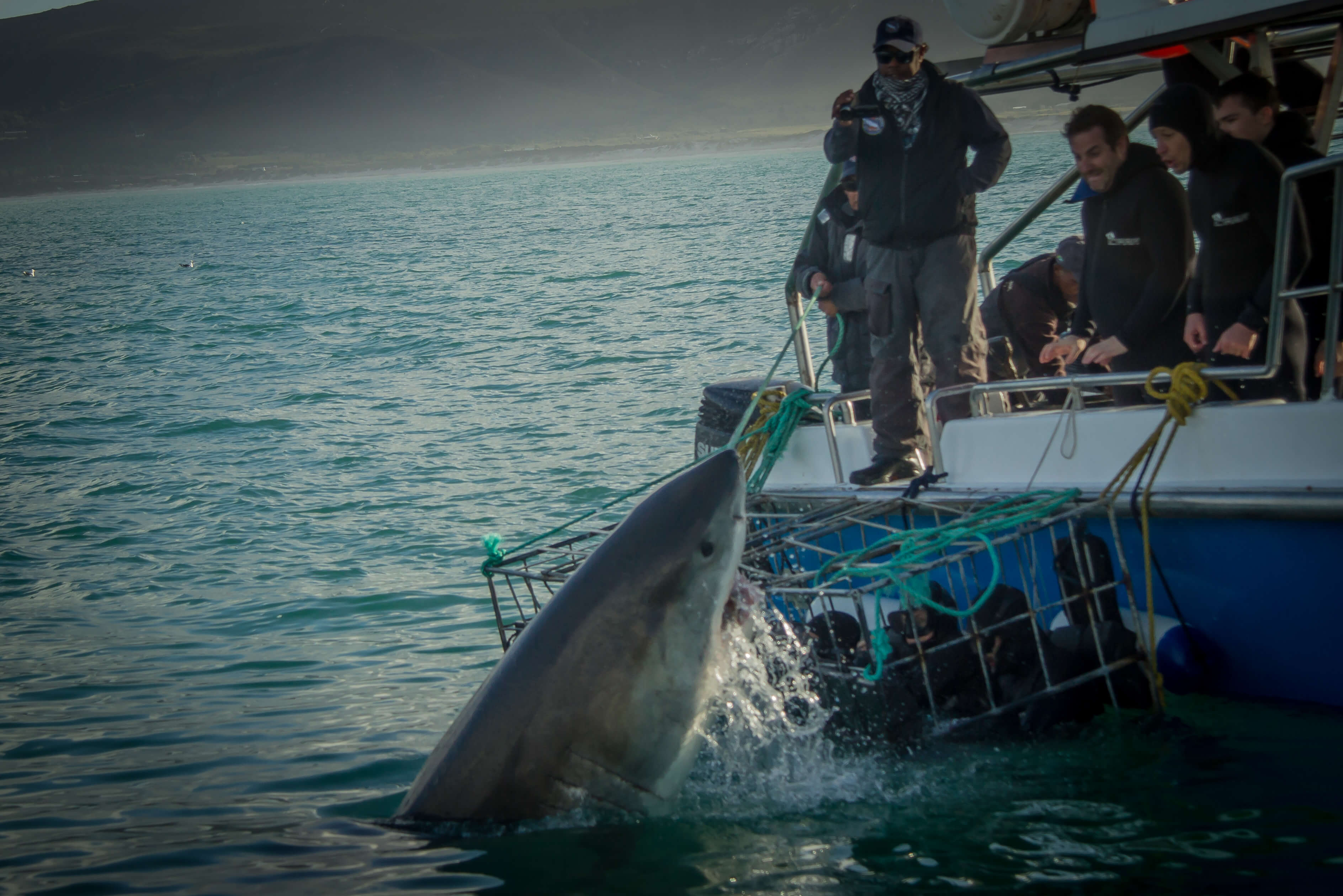 The Great White Shark Capital of The World